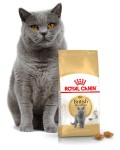Royal Canin British Shorthair  0,4/2/4/10 kg