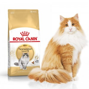 Royal Canin Norwegian Forest Cat Adult 0,4/2/10 kg