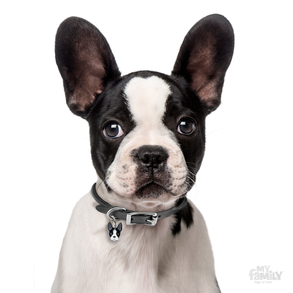 B Is For Boston Terrier My Family FRIENDS Bost...